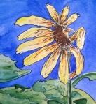 Joni Becker | ArtLight Therapy & Studios